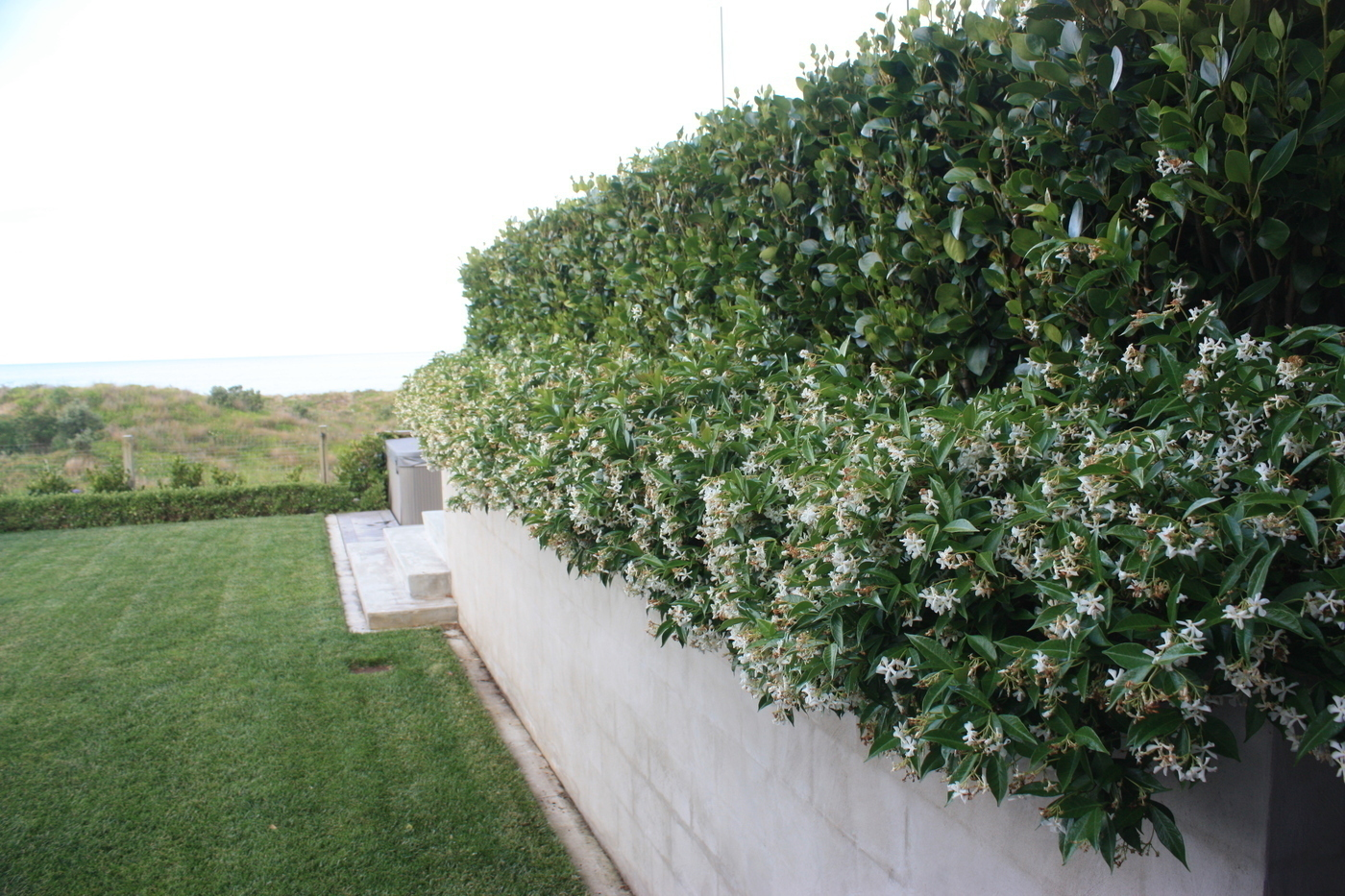 Side view of hedgerow